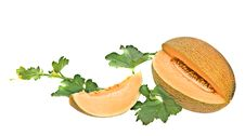 Free Melon And Its Segment Royalty Free Stock Photos - 10235408