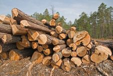 Free Sawmill Royalty Free Stock Images - 10237969