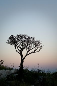 Tree 001 Stock Photography