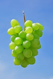 Free Grapes Royalty Free Stock Photo - 10238695