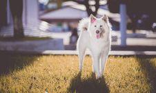 Free Adorable, Akita, Animal, Breed, Stock Photo - 102380450