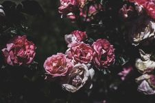 Free Bloom, Blooming, Blossom Stock Photos - 102380483