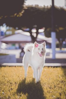 Free Adorable, Animal, Canine Royalty Free Stock Photography - 102380547