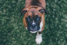 Free Adorable, Animal, Baby, Dog, Stock Images - 102380654