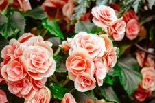 Free Beautiful, Bloom, Blooming, Blossom Royalty Free Stock Image - 102380706