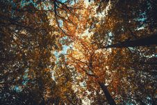 Free Autumn, Autumn, Leaves, Fall Royalty Free Stock Images - 102380709