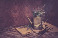 Free Bloom, Blossom, Container, Decor, Stock Photography - 102380752