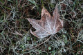 Free Frozen Leaf Royalty Free Stock Images - 10249359