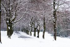 Free Snowy Path Stock Photography - 10241622