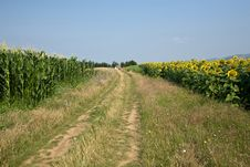Free Rural Landscape Stock Images - 10241844