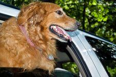 Free Happy Dog Royalty Free Stock Photography - 10244347