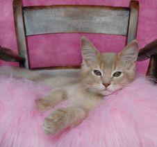 Free Kitten Relaxing On A Pink Cushion Stock Image - 10245641