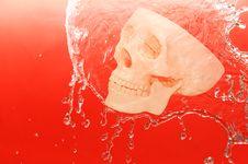 Free Skull Stock Photo - 10247040