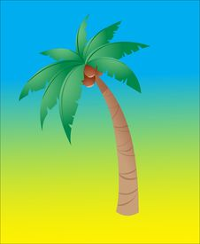 Free Coconut Tree Royalty Free Stock Photos - 10247318