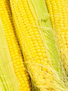 Free Fresh Taste Corn As Food Background. Stock Photos - 10247393
