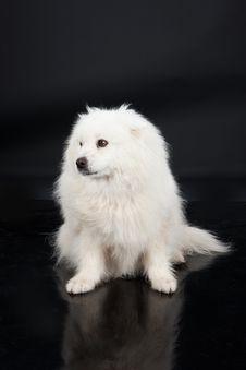 Free Husky Stock Photography - 10247602
