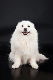 Free Husky Royalty Free Stock Photos - 10247618