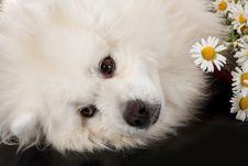Free Husky Stock Image - 10247711