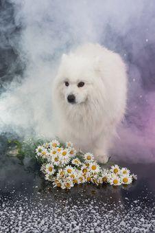 Free Husky Royalty Free Stock Photo - 10247825