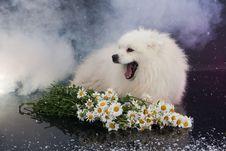 Free Husky Stock Photos - 10247843