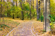 Free Autumn Colors In The Park Royalty Free Stock Image - 10248596