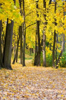 Free Autumn Colors In The Park Royalty Free Stock Photos - 10248758