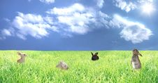Free Rabbits On A Glade Stock Photos - 10249193