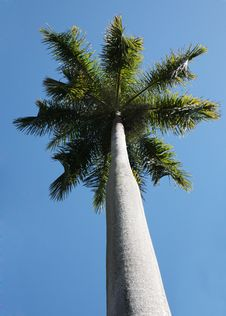 Free Palm Tree Stock Photography - 10249382
