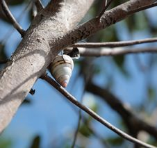 Free Live Snail Royalty Free Stock Images - 10249439
