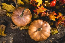 Free Abundance, Autumn, Fall, Farm Stock Image - 102463641