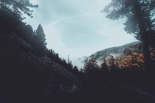 Free Conifer, Conifers, Fir, Trees Stock Image - 102463711
