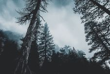 Free Conifer, Evergreen, Fir Royalty Free Stock Photos - 102463828