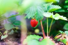 Free Agriculture, Blur, Color, Confection Royalty Free Stock Photos - 102464188