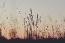 Free Sky, Morning, Grass, Grass Family Royalty Free Stock Images - 102473129