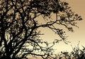 Free Silhouette Of Tree On Sundown Background Stock Photo - 10250880