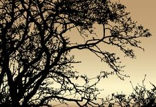 Silhouette Of Tree On Sundown Background Stock Photo