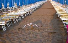 Free Seagull Start In The Beach Stock Images - 10250954
