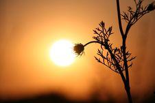 Free The Sundown. Stock Images - 10251034