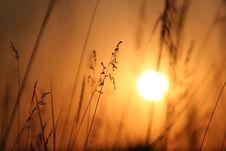 Free The Sundown. Royalty Free Stock Photography - 10251037