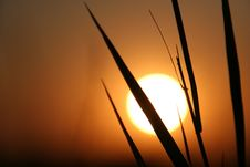 Free The Sundown. Royalty Free Stock Images - 10251309