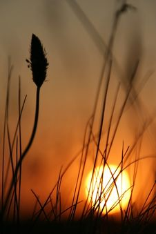 Free The Sundown. Royalty Free Stock Photos - 10251708