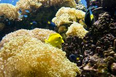 Various Fish In A Coral Reef Royalty Free Stock Photo