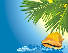 Free Cockleshell Among The Water And Palms Royalty Free Stock Photos - 10256618