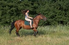 Free Girl Trot A Horse Royalty Free Stock Photos - 10257078