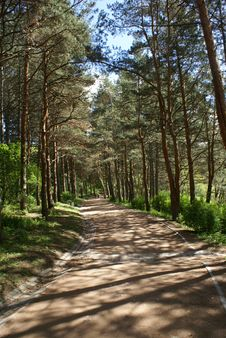 Free The  Way Through Trees Stock Photography - 10257692