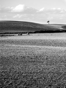 Free Small Tree On The Horizon In Rural Landscape Royalty Free Stock Photo - 10258215