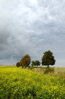 Free Small Tree On The Horizon In Rural Landscape Royalty Free Stock Image - 10258296