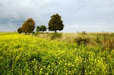 Free Small Tree On The Horizon In Rural Landscape Stock Images - 10258314