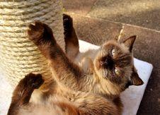 Free Cat, Fauna, Small To Medium Sized Cats, Cat Like Mammal Royalty Free Stock Photography - 102568227