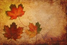 Free Leaf, Maple Leaf, Autumn, Texture Stock Photography - 102569572